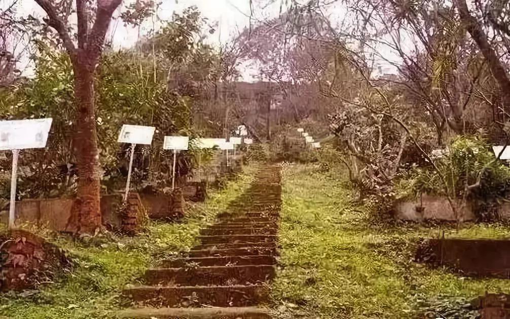 以中草药为主题的休闲农业,怎么规划设计才能赚到钱?