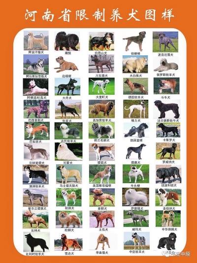 河南拟禁养斑点、萨摩耶、秋田等50种犬只,违者可罚上万元