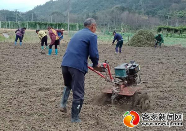 赣县石芫:产业扶贫助农增收