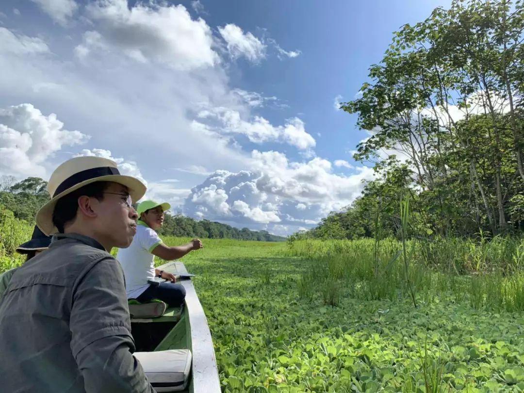 """与亚马逊雨林的漫长告别中,动物保护者的""""五十步与百步"""""""