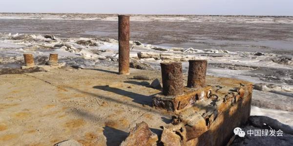 第三个中华斑海豹保护地成立,海上大熊猫保护网络初步成型