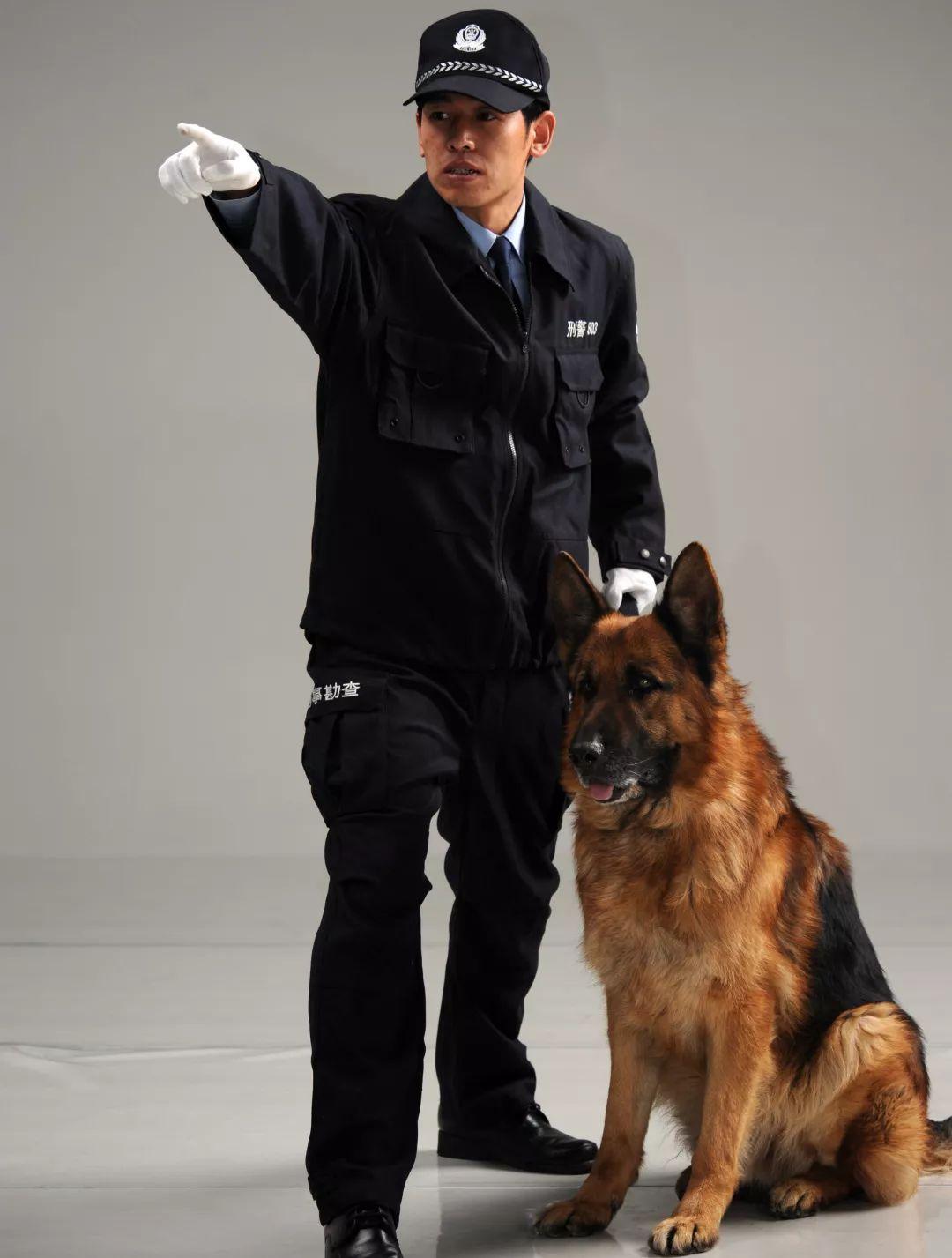 警察故事|刑警803警犬