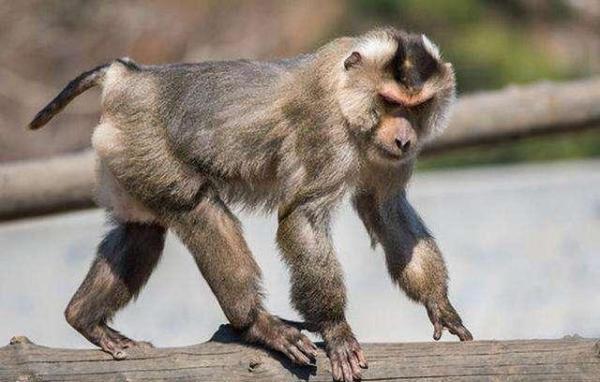 广西女子办动物园买3只珍稀猴类属一级保护动物,获刑10年_亚博
