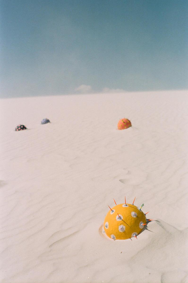 Desert Plants,35mm and digital photographs of papier-mâché sculptures,2014,图片来自艺术家网站