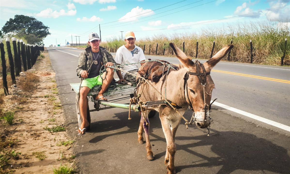 在巴西,驴子虽然仍被作为交通工使用,但近年来摩托车越来越受欢迎。