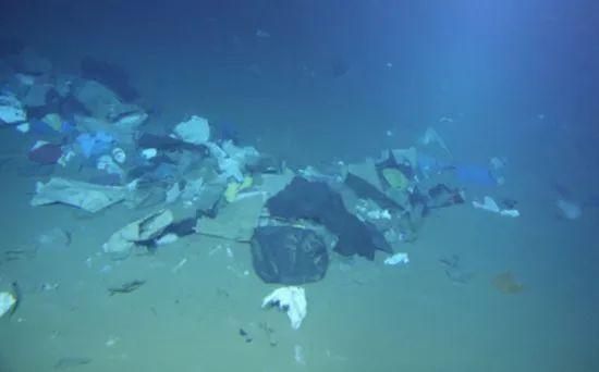 深海底的垃圾堆。钟广法教授独家提供