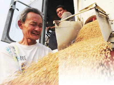 安徽省阜阳市颍州区西湖镇大沈庄农民沈俊彦望着大型联合收割机收获的丰收小麦喜上眉梢。? 本文图均为 人民日报 图