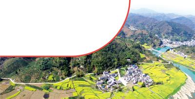 在位于安徽省歙县新安江两岸的新农村民居周围,油菜花处处开放,与远山近水交相辉映。
