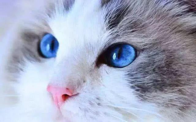 当爱猫之人失去一只猫