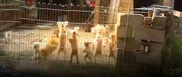 央视曝光地下宠物繁殖场:宠物沦为繁殖机器,死亡率超五成