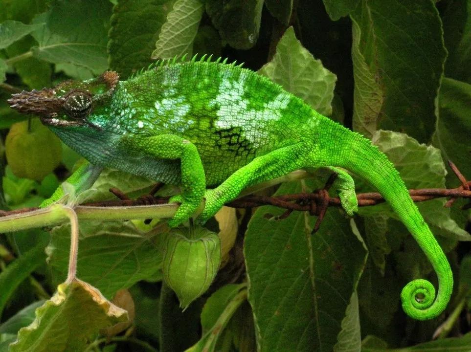 模仿蛇和变色龙,我国科学家研制出兼具变色和变形性能新材料