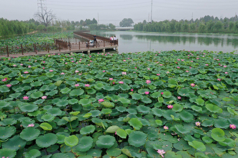 8月5日,市民在丽盈平台注册-丽盈官方省温县环城水系南渠亲水栈道欣赏荷花。