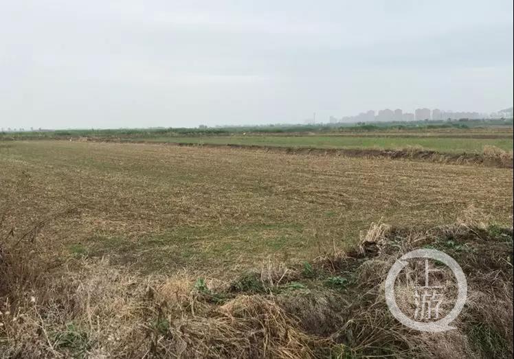 镇江江豚保护区内违建影视基地,环保组织提起公益诉讼