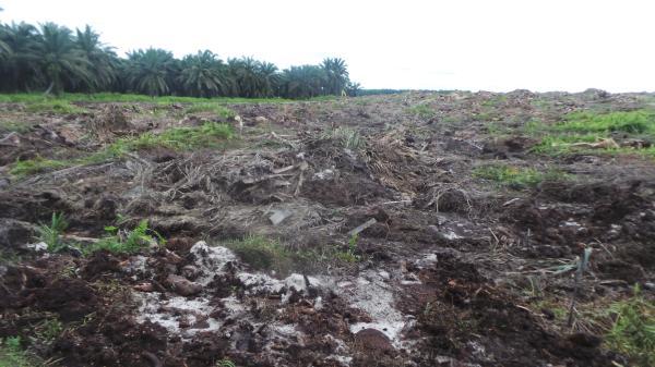 马林德人的森林几乎被完全毁灭