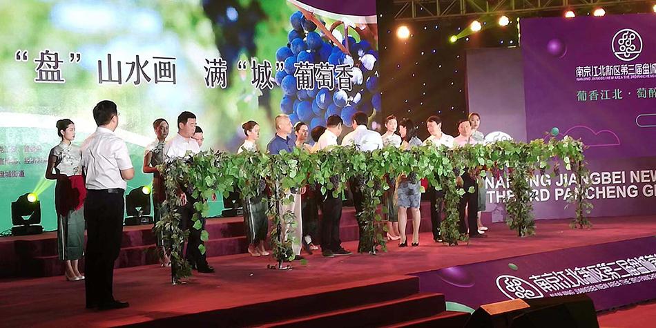 """国家级新区发展农业的""""盘城方案"""":葡萄为媒、经济唱戏"""