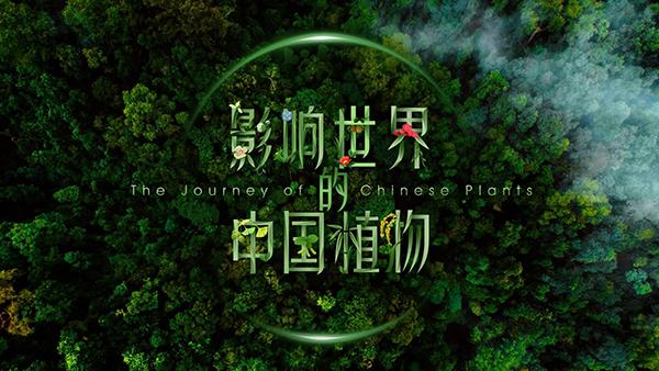 4K纪录片《影响世界的中国植物》即将播出