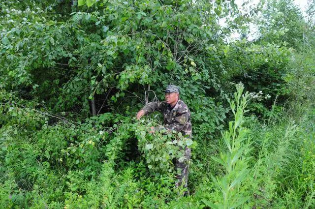 """黑龙江国有林区绿色转型:过去靠木头,现在主""""吃""""林下经济"""