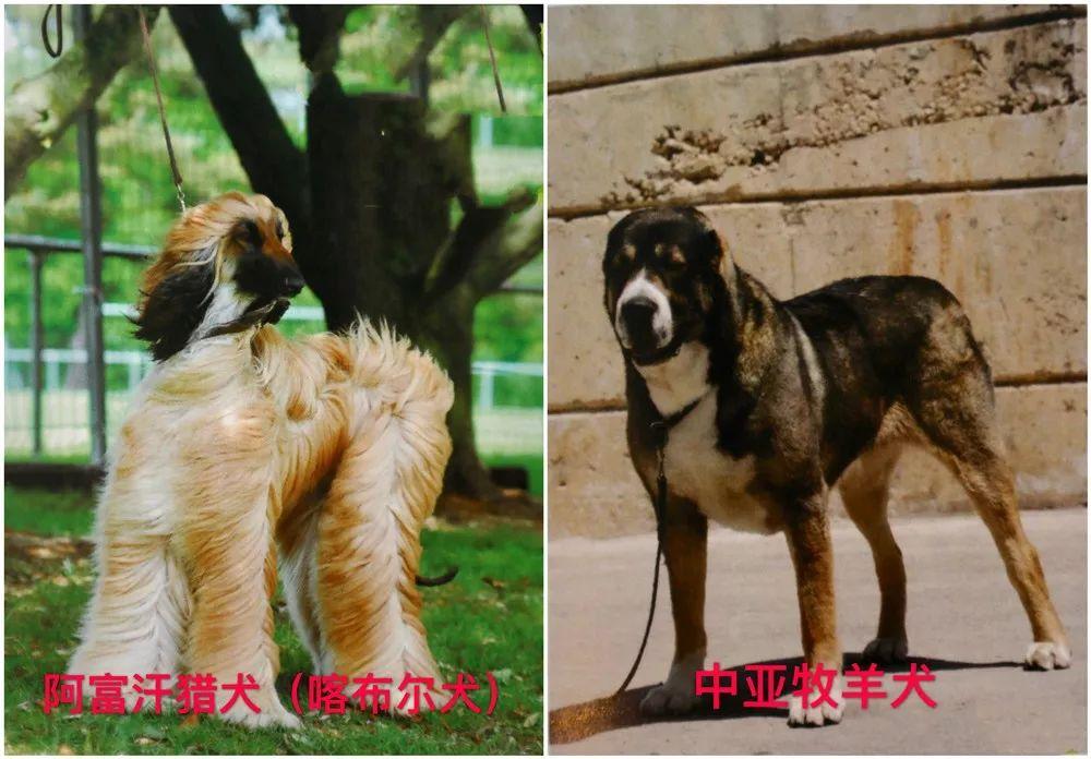 拉斯加犬好养吗_提醒  天津发布养犬新规!这些犬种禁止饲养