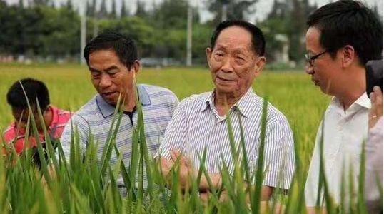 湖南雜交水稻研究中心研究員楊耀松提供