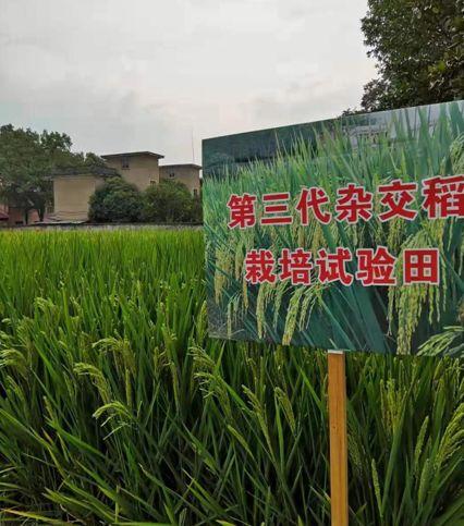 雜交水稻國家重點實驗室研究員李新奇提供