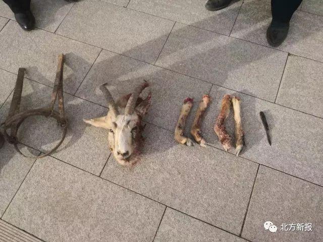 非法猎杀一只国家二级保护动物鹅喉羚,内蒙古一男子获刑赔款