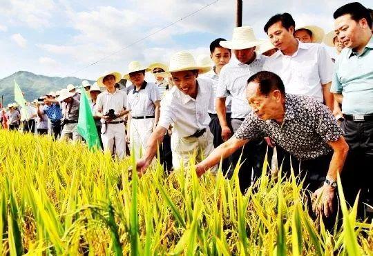 虚岁90,袁隆平依然管不住他那迈向稻田的腿:每天下田4次