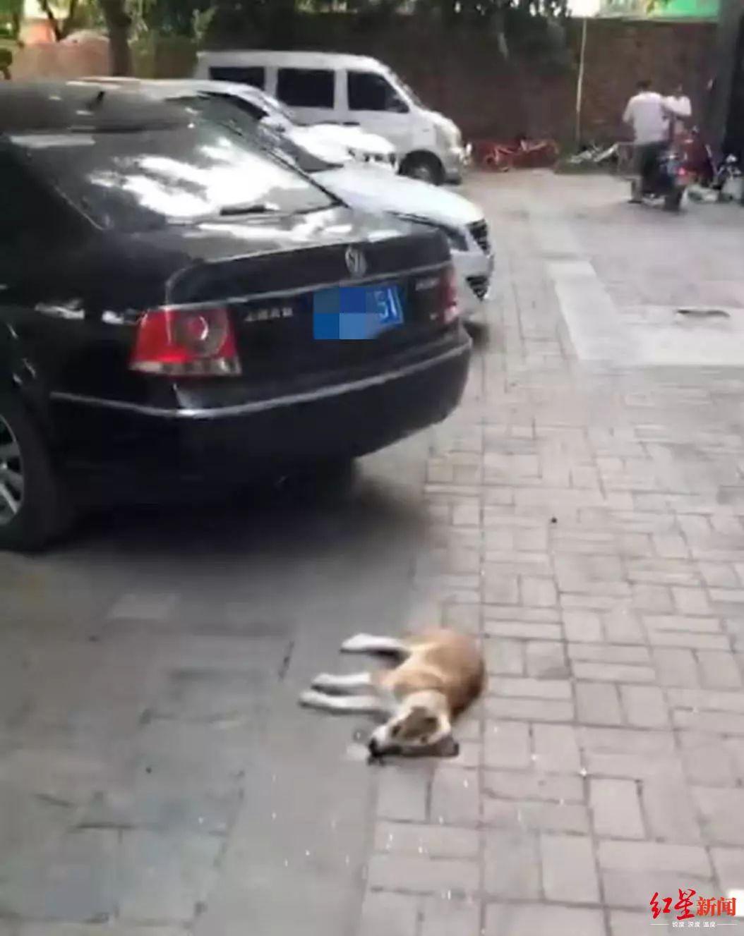 高空坠狗砸坏轿车,维修费五千八谁付?物业:流浪狗自己跳的