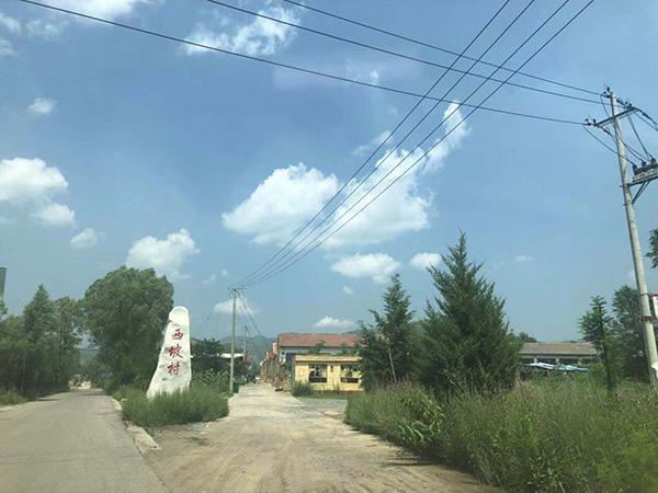 王见刚老家所在的西坡村。本文图均为 澎湃新闻记者 陈雷柱 图