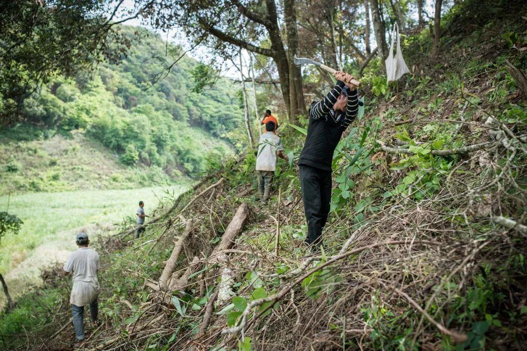 村民们正在进行食物源地的清理、种植工作