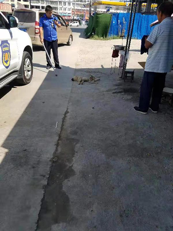 河南固始疯狗咬人伤者升至15人,已有一条伤人流浪狗被打死