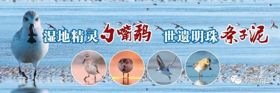 曹路宝来东台调研