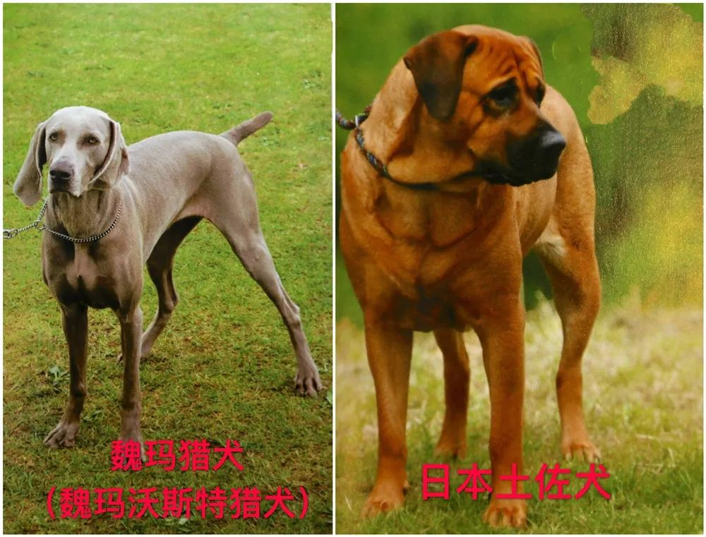 拉斯加犬好养吗_所有人,天津养犬有新规!哪些犬种禁养