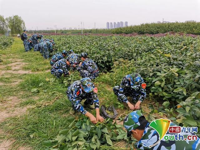 "<b>天津大学开荒10亩""责任田"":学生自己种地、收菜、分粮</b>"