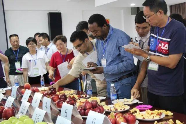 《澳洲新运8网上投注》_10个国家20位专家 高山中早熟苹果鉴评会 昭通包