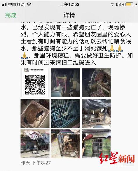 68网赚广州一宠物店20余只猫狗惨死,老板疑靠流浪猫狗