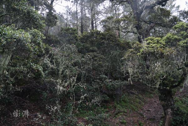 保护区内的植被包含大量云杉、冷杉,平均生长海拔在3500米以上。