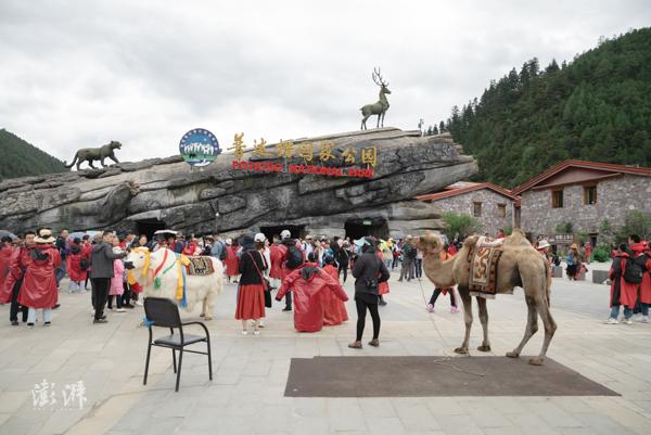 2019年8月2日,普达措国家公园大门外聚集着大量游客。(本文图片均为 澎湃新闻 周平浪 图 )