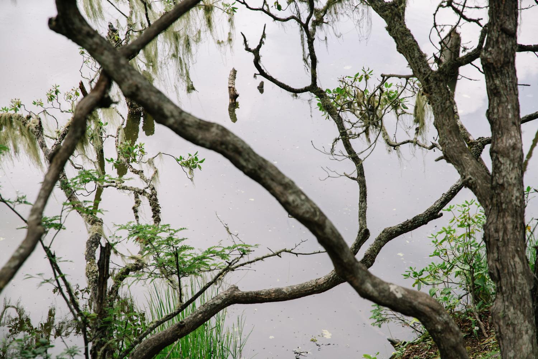 普达措国家公园属都湖畔,每棵树上都挂着丝状淡绿色的寄生植物松萝,因当地人认为只会在空气质量极为良好的环境下生长,所以它也被称为环境监测计。