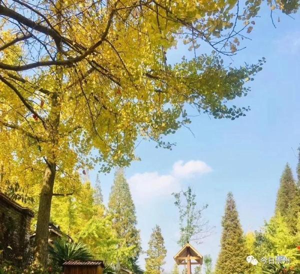【谁不说咱家乡好】观胜:绿色与发展齐飞 田园和水木共美