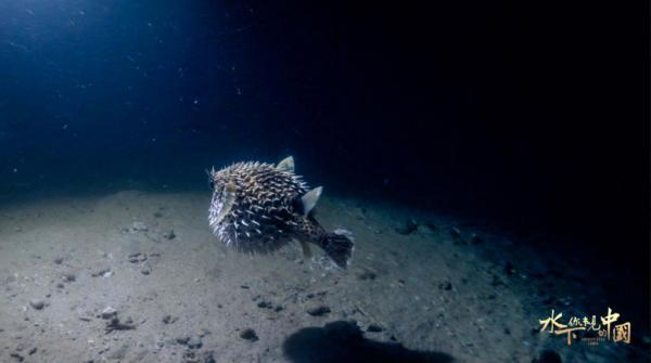 江河湖海皆为家园,纪录片呈现水下中国
