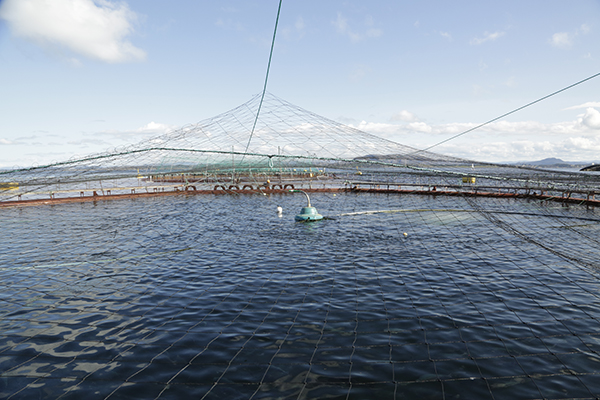 挪威布罗姆公司的三文鱼养殖场