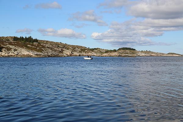 在挪威,捕捞野生三文鱼已变成一种休闲娱乐而非食物来源。