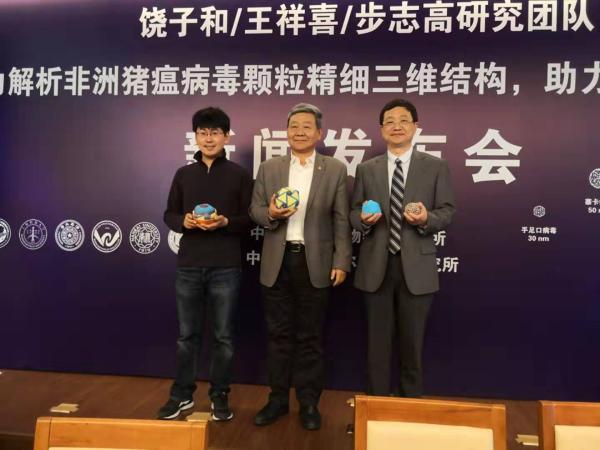 中国团队获首张非洲猪瘟病毒结构高清图,为新型疫苗提供线索