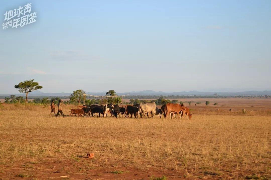坦桑尼亚西南【部】【的】【小】村庄Hangomba。