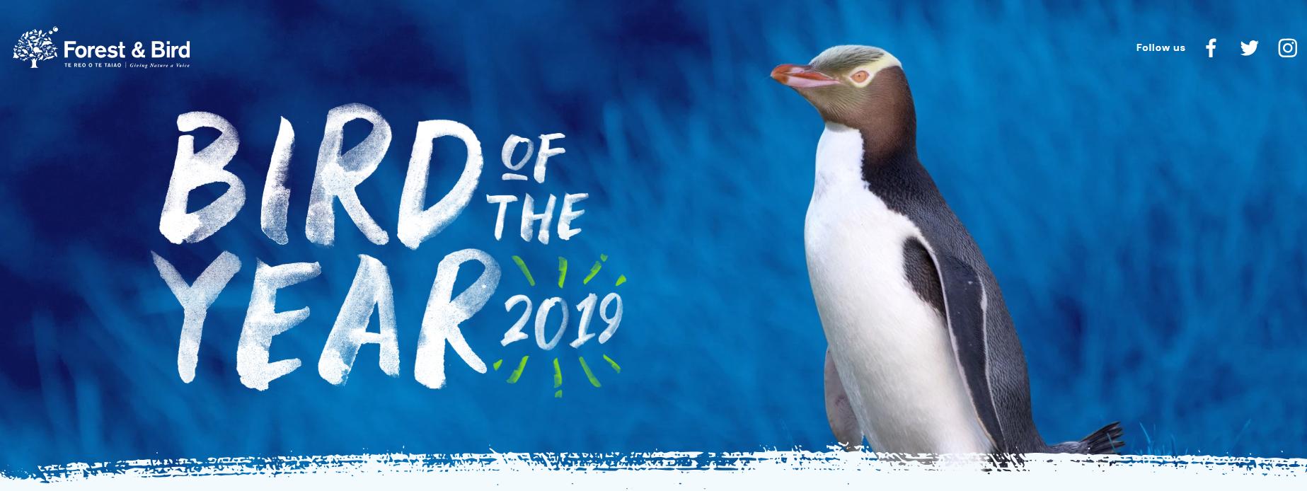 """濒危黄眼企鹅以微弱优势击败鸮鹦鹉,当选新西兰""""年度鸟"""""""