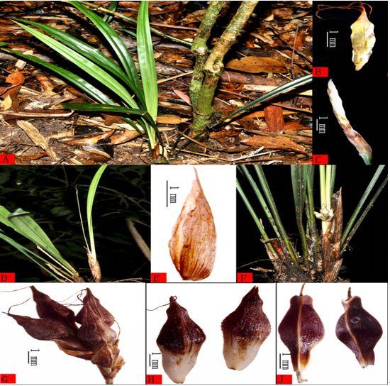 刷新中国新记录!科学家发现海南特有新物种11个