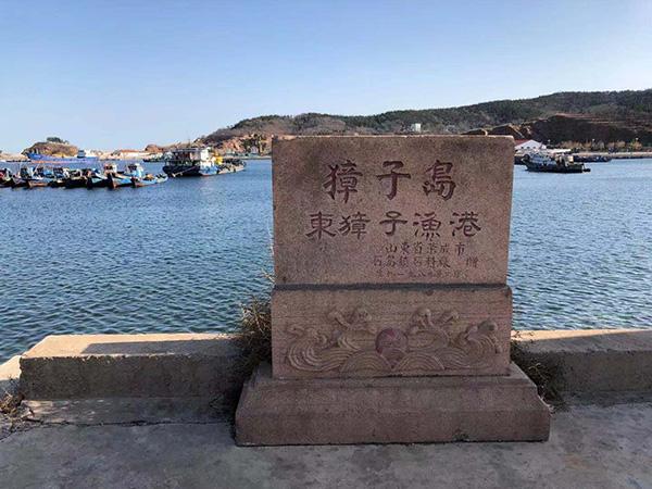 """獐子岛渔港现大量死亡扇贝,谈及捕捞情况船员称""""不敢说"""""""