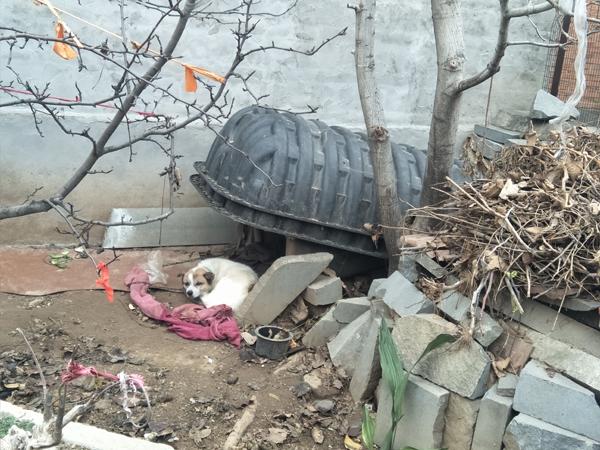国务院检查组:济南章丘农村改厕流于形式,验收时弄虚作假