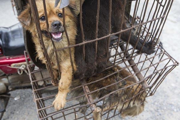 色狗与人弄的直流水_浙江最大毒狗肉案:17人制售超38吨,毒狗者自称不吃狗肉