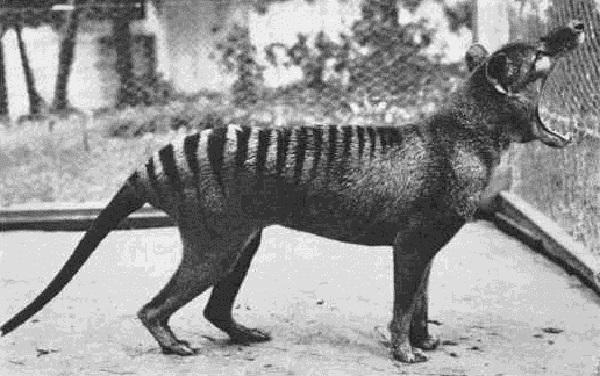 史上体型最大的动物